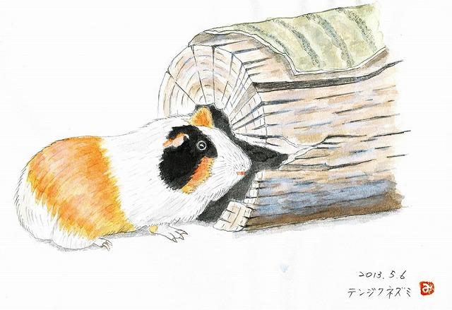 テンジクネズミの画像 p1_18